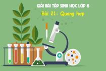 Giải Bài 21: Quang hợp - sgk Sinh học 6 trang 68