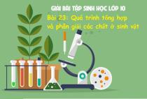 Giải Bài 23: Quá trình tổng hợp và phân giải các chất ở vi sinh vật