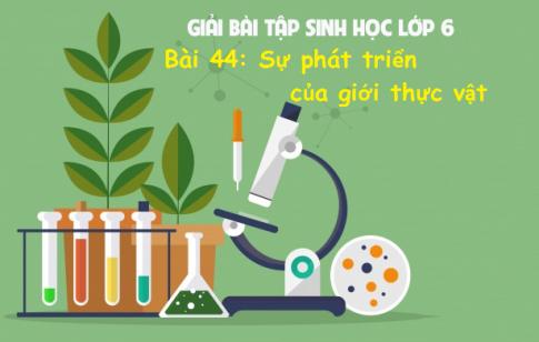 Giải bài 44 sinh 6: Sự phát triển của giới Thực vật