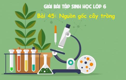 Giải bài 45 sinh 6: Nguồn gốc cây trồng