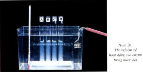 Giải sinh 8 bài 26: Thực hành Tìm hiểu hoạt động của enzim trong nước bọt